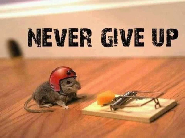 persistence-mouse